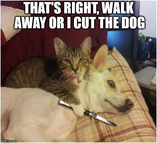 Warning killer cat | THAT'S RIGHT, WALK AWAY OR I CUT THE DOG | image tagged in warning killer cat | made w/ Imgflip meme maker