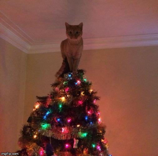 Spitze Für Tannenbaum.Das Sind Die 10 Kreativsten Weihnachtsbaum Spitzen