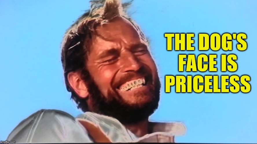 Charlton Heston Planet of the Apes Laugh | THE DOG'S FACE IS PRICELESS | image tagged in charlton heston planet of the apes laugh | made w/ Imgflip meme maker