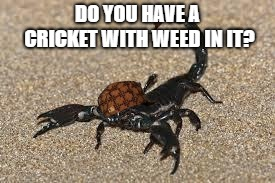 Scumbag Scorpion | DO YOU HAVE A CRICKET WITH WEED IN IT? | image tagged in scumbag scorpion | made w/ Imgflip meme maker