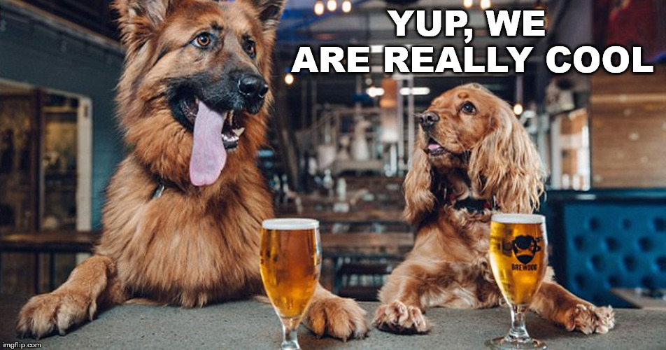 dog drinking | YUP, WE ARE REALLY COOL | image tagged in dog drinking | made w/ Imgflip meme maker
