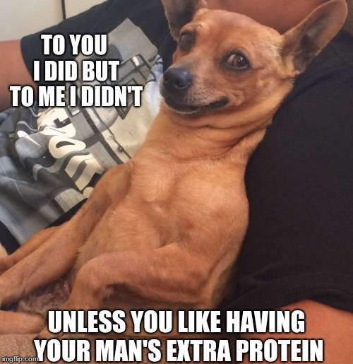 Max the Sarcastic Dog | TO YOU I DID BUT TO ME I DIDN'T UNLESS YOU LIKE HAVING YOUR MAN'S EXTRA PROTEIN | image tagged in max the sarcastic dog | made w/ Imgflip meme maker