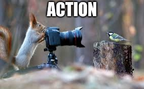 Action | ACTION | image tagged in squirrel | made w/ Imgflip meme maker