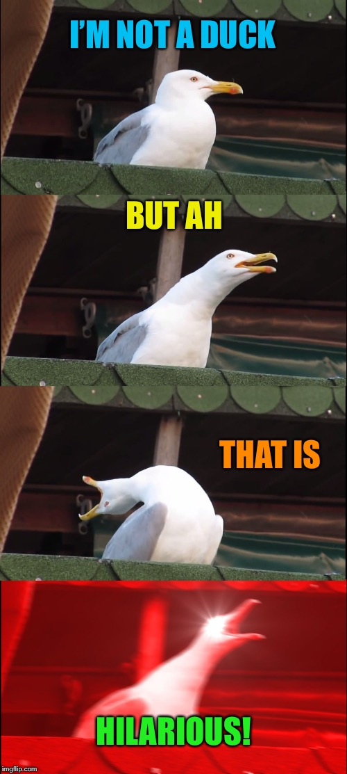 Inhaling Seagull Meme | I'M NOT A DUCK BUT AH THAT IS HILARIOUS! | image tagged in memes,inhaling seagull | made w/ Imgflip meme maker