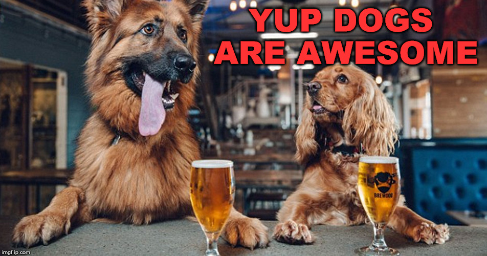 dog drinking | YUP DOGS ARE AWESOME | image tagged in dog drinking | made w/ Imgflip meme maker
