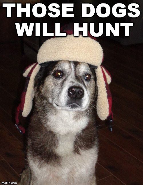 hunting dog | THOSE DOGS WILL HUNT | image tagged in hunting dog | made w/ Imgflip meme maker