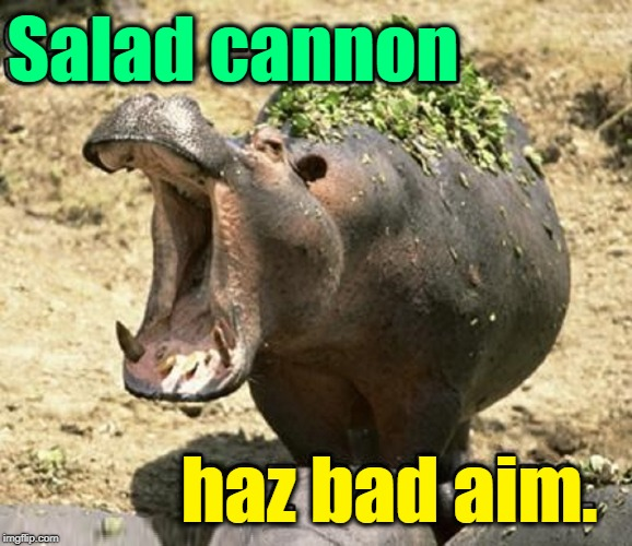 The Salad Shooter 9000 | Salad cannon haz bad aim. | image tagged in vince vance,hippopotamus,zoo,hippo,salad,feeding time | made w/ Imgflip meme maker