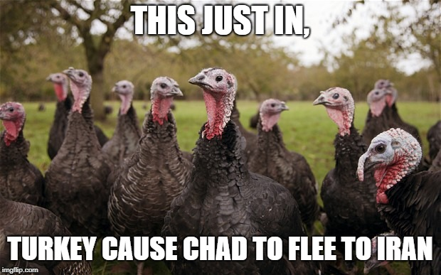 Turkeys | THIS JUST IN, TURKEY CAUSE CHAD TO FLEE TO IRAN | image tagged in turkeys | made w/ Imgflip meme maker