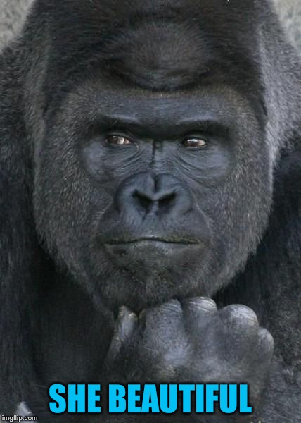 Handsome Gorilla | SHE BEAUTIFUL | image tagged in handsome gorilla | made w/ Imgflip meme maker