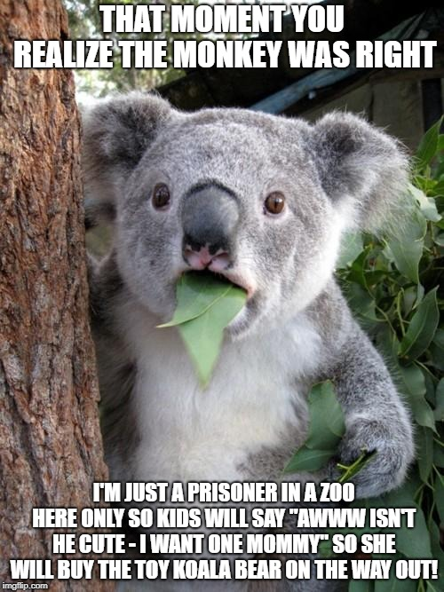 "Surprised Koala Meme | THAT MOMENT YOU REALIZE THE MONKEY WAS RIGHT I'M JUST A PRISONER IN A ZOO HERE ONLY SO KIDS WILL SAY ""AWWW ISN'T HE CUTE - I WANT ONE MOMMY"" 