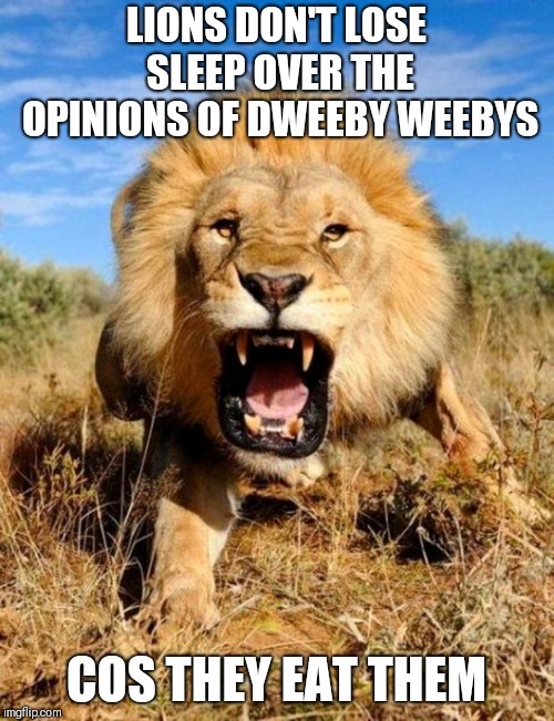Why lions don't like weeaboos | LIONS DON'T LOSE SLEEP OVER THE OPINIONS OF DWEEBY WEEBYS COS THEY EAT THEM | image tagged in lion,memes,weeaboo | made w/ Imgflip meme maker