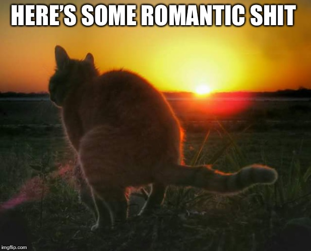 cat pooping and sunset | HERE'S SOME ROMANTIC SHIT | image tagged in cat pooping and sunset | made w/ Imgflip meme maker