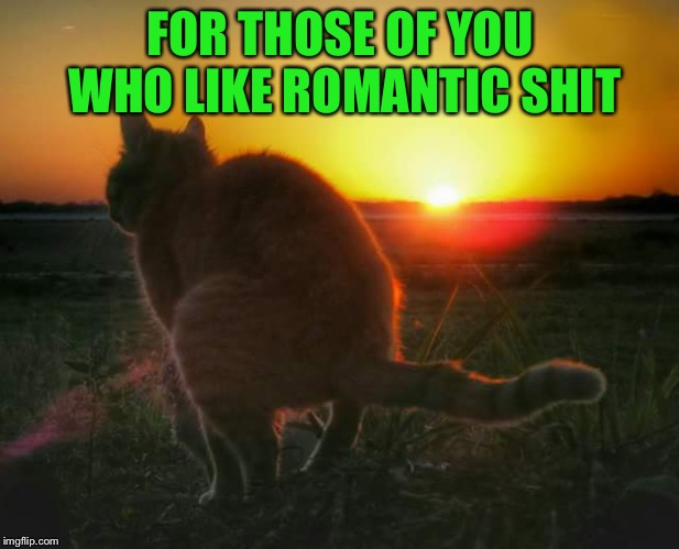 You're welcome ~Inspired by Ricky_out_loud | FOR THOSE OF YOU WHO LIKE ROMANTIC SHIT | image tagged in cat pooping and sunset,memes,romantic,sunset,cats,funny | made w/ Imgflip meme maker
