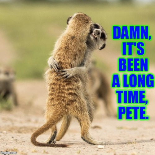 Meerkat Reunion | DAMN, IT'S BEEN A LONG TIME,    PETE. | image tagged in vince vance,meerkats,friends,love,friendship,reunion | made w/ Imgflip meme maker