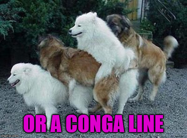 OR A CONGA LINE | made w/ Imgflip meme maker