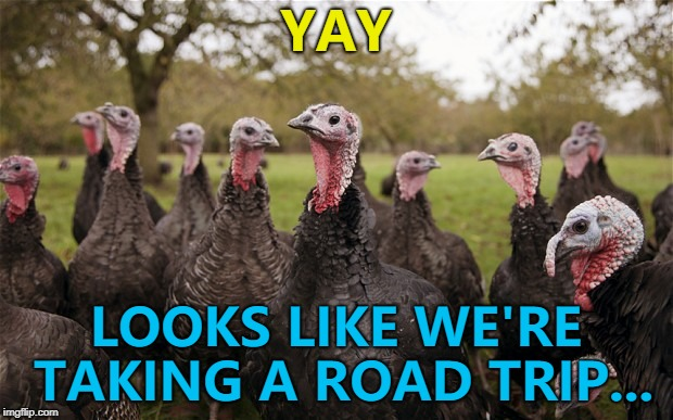 Who's going to tell them? :)  | YAY LOOKS LIKE WE'RE TAKING A ROAD TRIP... | image tagged in turkeys,memes,thanksgiving | made w/ Imgflip meme maker