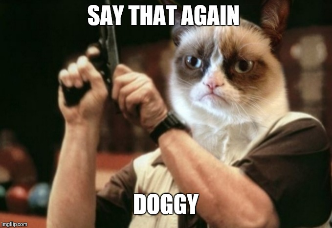 Grumpy cat | SAY THAT AGAIN DOGGY | image tagged in grumpy cat | made w/ Imgflip meme maker