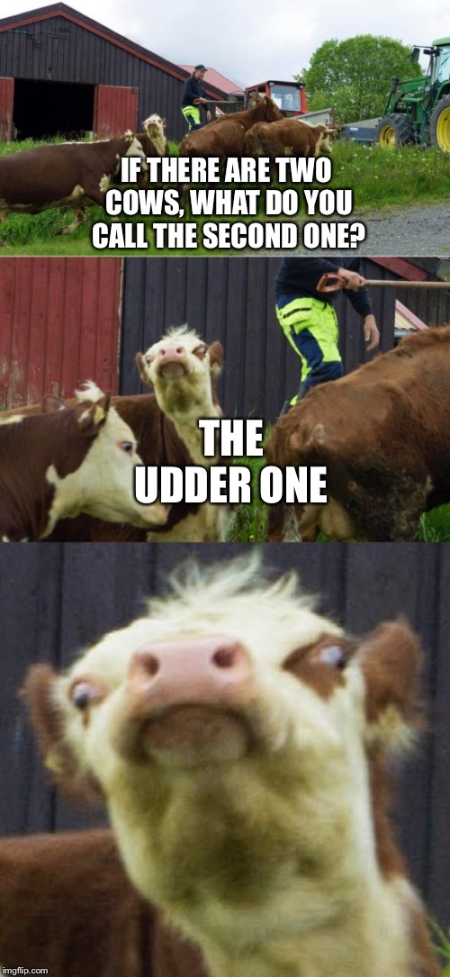 Bad pun cow  | IF THERE ARE TWO COWS, WHAT DO YOU CALL THE SECOND ONE? THE UDDER ONE | image tagged in bad pun cow | made w/ Imgflip meme maker