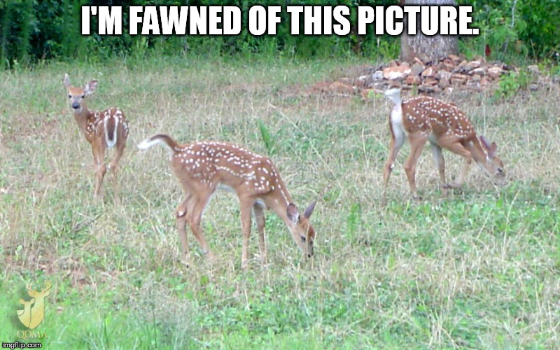 I'm fawned of this picture | I'M FAWNED OF THIS PICTURE. | image tagged in i'm fawned of this picture | made w/ Imgflip meme maker