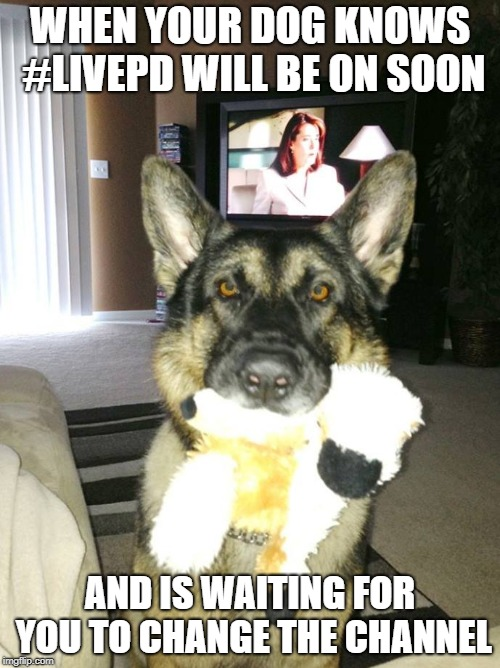 WHEN YOUR DOG KNOWS #LIVEPD WILL BE ON SOON AND IS WAITING FOR YOU TO CHANGE THE CHANNEL | image tagged in dog with toy | made w/ Imgflip meme maker
