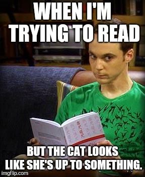 Sheldon Cooper | WHEN I'M TRYING TO READ BUT THE CAT LOOKS LIKE SHE'S UP TO SOMETHING. | image tagged in sheldon cooper | made w/ Imgflip meme maker
