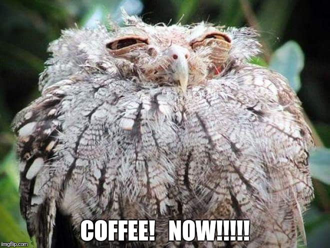Coffee NOW!!! | COFFEE!   NOW!!!!! | image tagged in funny owl,funny coffee,morning coffee | made w/ Imgflip meme maker