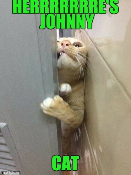 Here's Johnny  | HERRRRRRRE'S JOHNNY CAT | image tagged in heres johnny | made w/ Imgflip meme maker