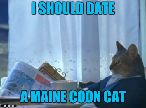 I Should Buy A Boat Cat Meme | I SHOULD DATE A MAINE COON CAT | image tagged in memes,i should buy a boat cat | made w/ Imgflip meme maker