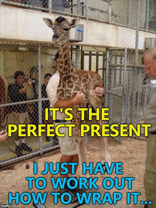 Remember - a giraffe is for life, not just for Christmas... :) | IT'S THE PERFECT PRESENT I JUST HAVE TO WORK OUT HOW TO WRAP IT... | image tagged in giraffe hugging,memes,animals,christmas,giraffes | made w/ Imgflip meme maker