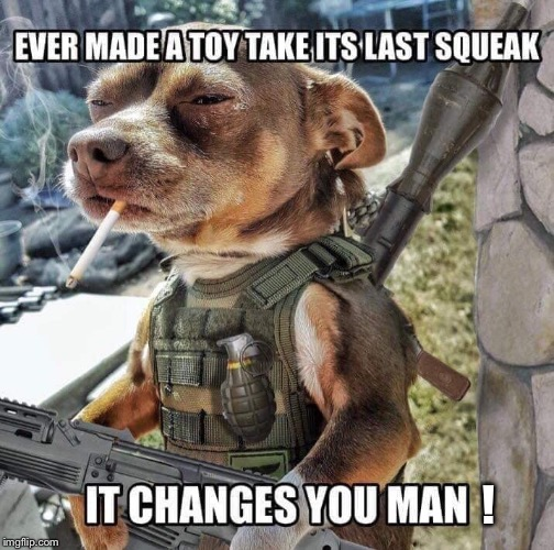 Squeaky toy never stood a chance  |  ! | image tagged in memes,repost,dog,toy | made w/ Imgflip meme maker