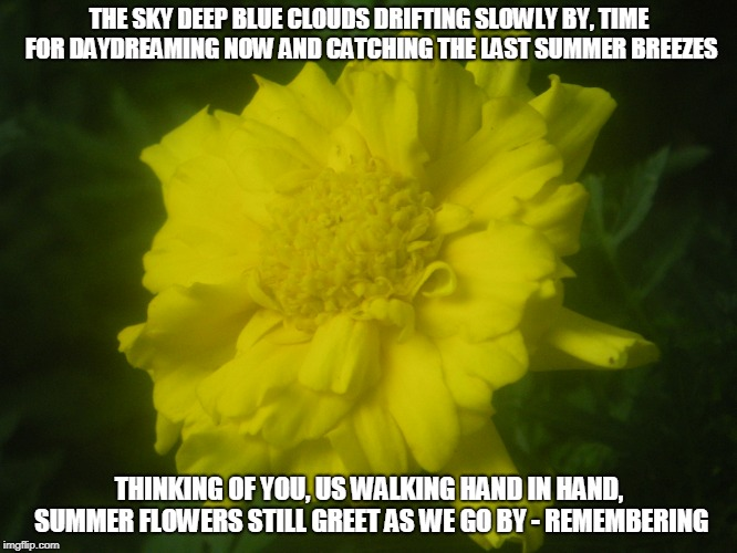 Remembering | THE SKY DEEP BLUE CLOUDS DRIFTING SLOWLY BY, TIME FOR DAYDREAMING NOW AND CATCHING THE LAST SUMMER BREEZES THINKING OF YOU, US WALKING HAND  | image tagged in clouds,remembering,daydreams,summer,summer breezes,summer flowers | made w/ Imgflip meme maker