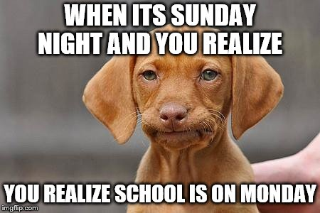 School IS TOMORROW!?!?!? | WHEN ITS SUNDAY NIGHT AND YOU REALIZE YOU REALIZE SCHOOL IS ON MONDAY | image tagged in dissapointed puppy | made w/ Imgflip meme maker