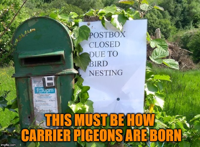 Neither snow nor rain nor... oh birds are nesting? We stop for that. | THIS MUST BE HOW CARRIER PIGEONS ARE BORN | image tagged in memes,birds,dashhopes,postbox,nesting,funny | made w/ Imgflip meme maker