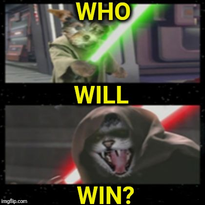 Dog Vs Cat Lightsabers | WHO WIN? WILL | image tagged in dog vs cat lightsabers | made w/ Imgflip meme maker