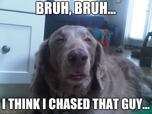 High Dog | BRUH, BRUH... I THINK I CHASED THAT GUY... | image tagged in memes,high dog | made w/ Imgflip meme maker
