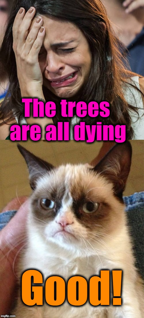 Move to Australia! It's springtime there | The trees are all dying Good! | image tagged in merciless grumpy cat | made w/ Imgflip meme maker
