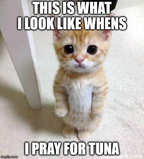Cute Cat Meme | THIS IS WHAT I LOOK LIKE WHENS I PRAY FOR TUNA | image tagged in memes,cute cat | made w/ Imgflip meme maker