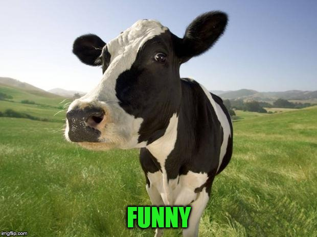 cow | FUNNY | image tagged in cow | made w/ Imgflip meme maker