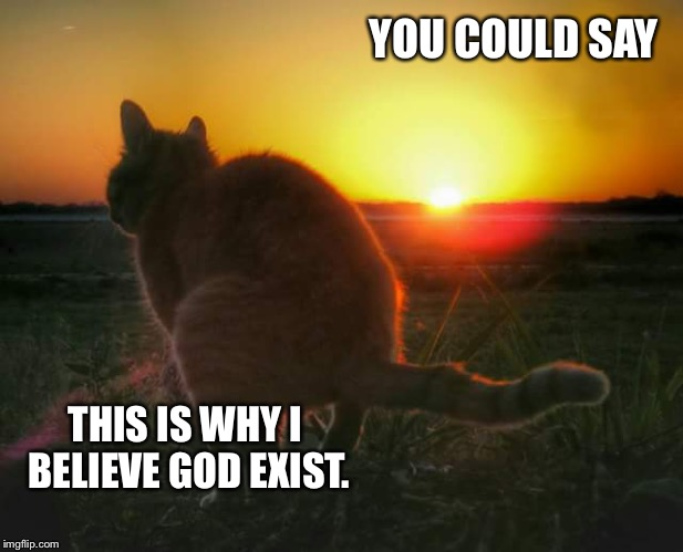 cat pooping and sunset | YOU COULD SAY THIS IS WHY I BELIEVE GOD EXIST. | image tagged in cat pooping and sunset | made w/ Imgflip meme maker