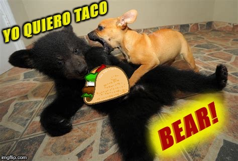 Inspired by btbearston - er, beerston - oh nevermind! | image tagged in btbeeston,bears,tacos,cute puppies,funny animals,palaxote | made w/ Imgflip meme maker