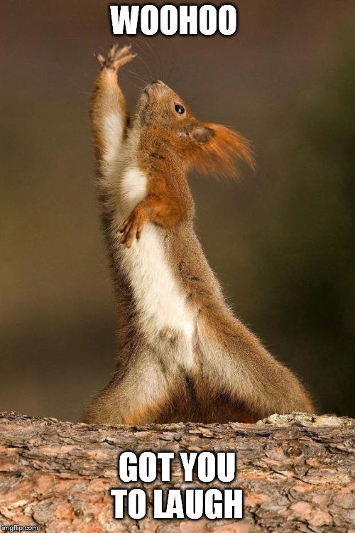 Dancing Squirrel | WOOHOO GOT YOU TO LAUGH | image tagged in dancing squirrel | made w/ Imgflip meme maker