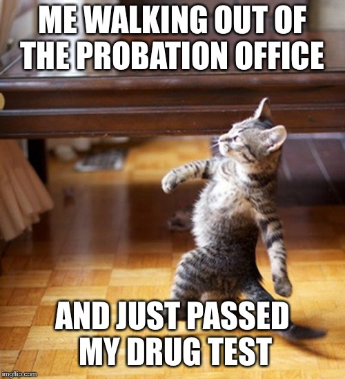 Cat Walking Like A Boss | ME WALKING OUT OF THE PROBATION OFFICE AND JUST PASSED MY DRUG TEST | image tagged in cat walking like a boss | made w/ Imgflip meme maker
