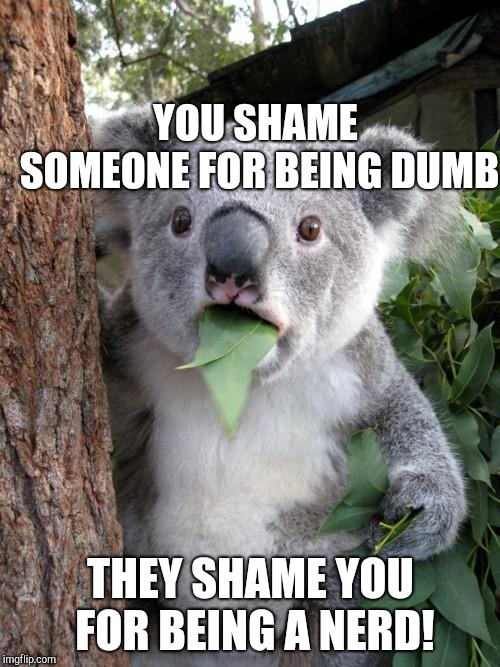 Surprised Koala Meme | YOU SHAME SOMEONE FOR BEING DUMB THEY SHAME YOU FOR BEING A NERD! | image tagged in memes,surprised koala | made w/ Imgflip meme maker