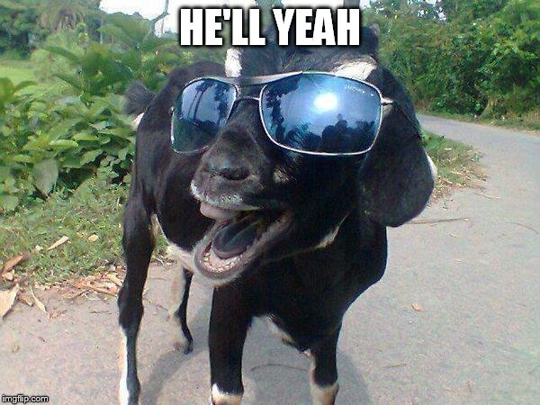 Hell Yeah Goat! | HE'LL YEAH | image tagged in hell yeah goat | made w/ Imgflip meme maker