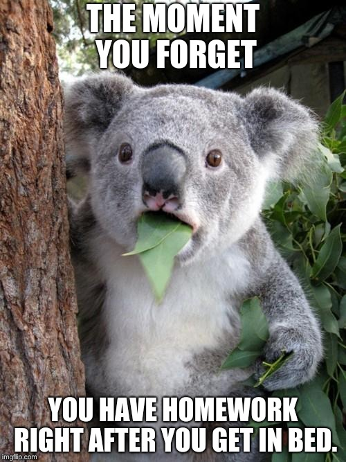 Surprised Koala Meme | THE MOMENT YOU FORGET YOU HAVE HOMEWORK RIGHT AFTER YOU GET IN BED. | image tagged in memes,surprised koala | made w/ Imgflip meme maker