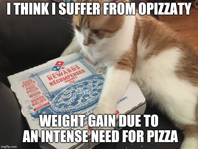I THINK I SUFFER FROM OPIZZATY WEIGHT GAIN DUE TO AN INTENSE NEED FOR PIZZA | image tagged in cat pizza | made w/ Imgflip meme maker