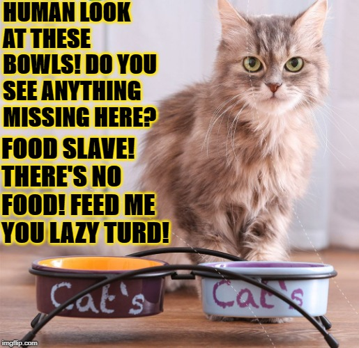 HUMAN LOOK AT THESE BOWLS! DO YOU SEE ANYTHING MISSING HERE? FOOD SLAVE! THERE'S NO FOOD! FEED ME YOU LAZY TURD! | image tagged in feed me | made w/ Imgflip meme maker