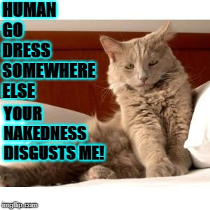 HUMAN GO DRESS SOMEWHERE ELSE YOUR NAKEDNESS DISGUSTS ME! | image tagged in disgusted kitty | made w/ Imgflip meme maker