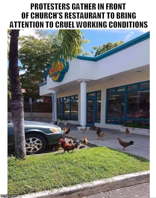 Breaking News!!! | PROTESTERS GATHER IN FRONT OF CHURCH'S RESTAURANT TO BRING ATTENTION TO CRUEL WORKING CONDITIONS | image tagged in chicken,chickens,fried chicken,church's chicken,funny memes,protesters | made w/ Imgflip meme maker