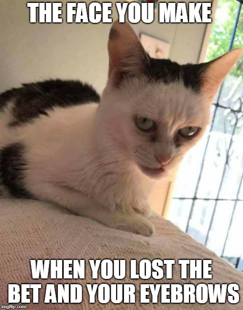 the face you make when lose your eyebrows in a bet | THE FACE YOU MAKE WHEN YOU LOST THE BET AND YOUR EYEBROWS | image tagged in face,eyebrows,cat,bet,lost,lose | made w/ Imgflip meme maker
